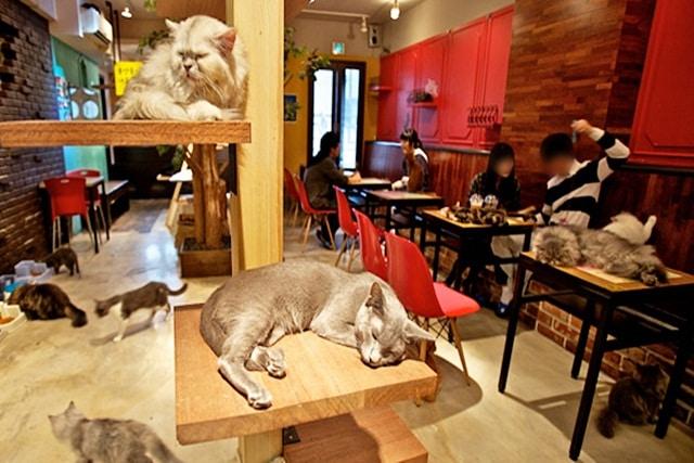 Karlsruher Stehen Schlange Erstes Katzencafé In Karlsruhe Feiert