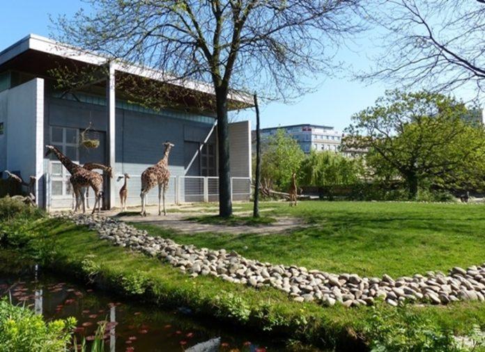 Zoo Karlsruhe Corona