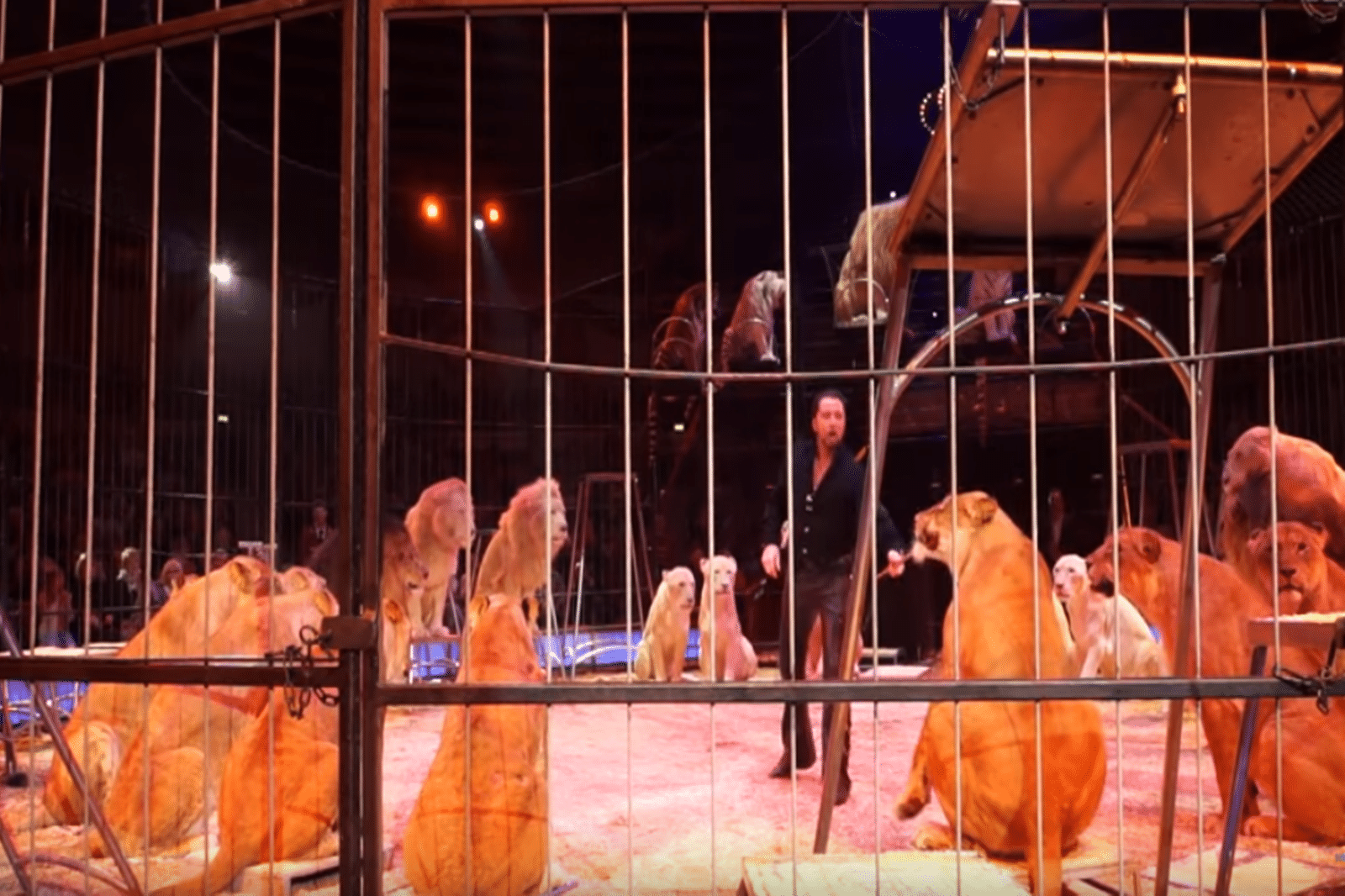 Zirkus Karlsruhe