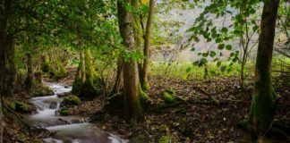 Fließender Bach plätschert durch einen Wald in Baden-Württemberg
