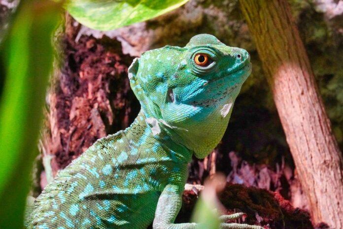 Reptilien im Zoo