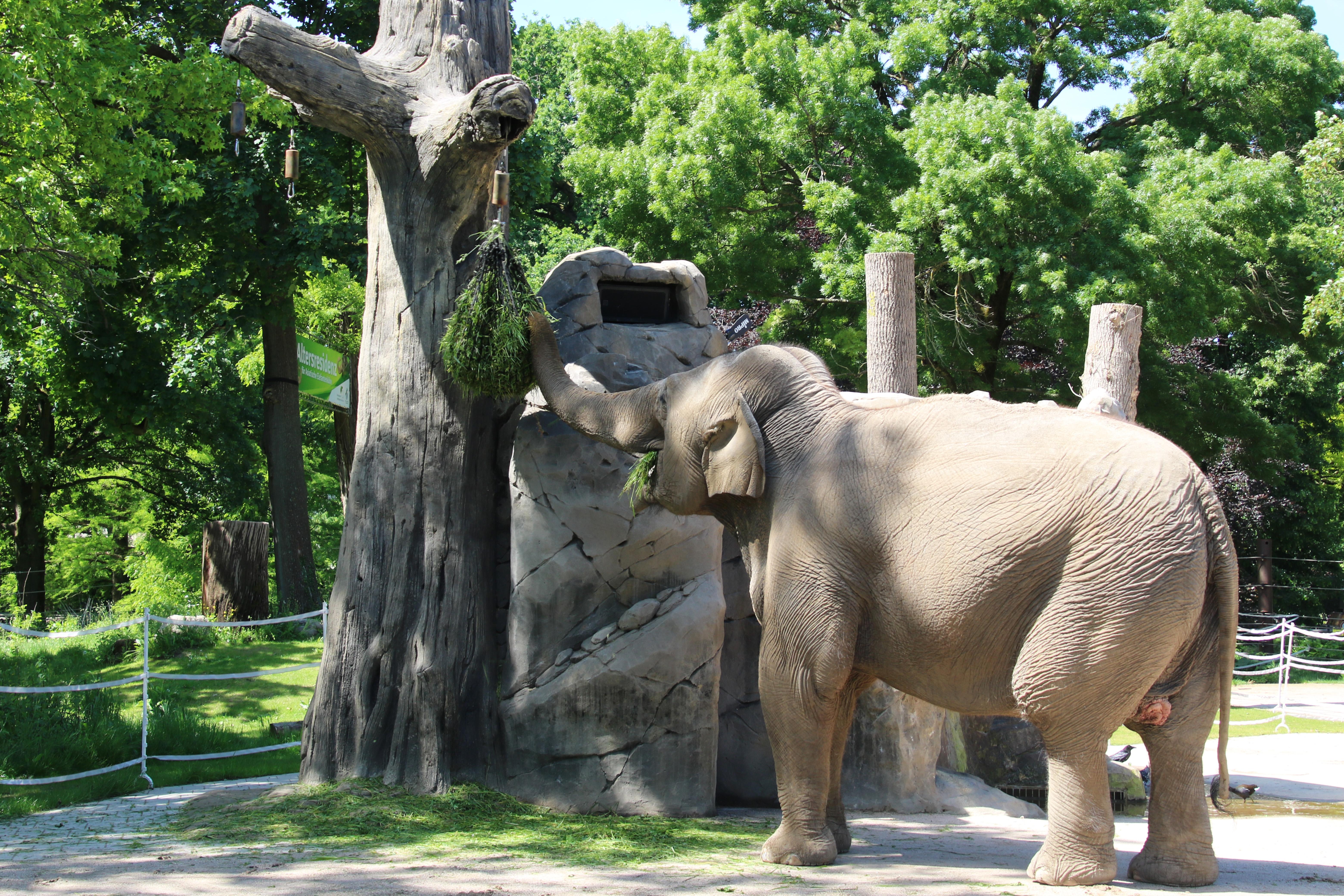 Zoo In Karlsruhe