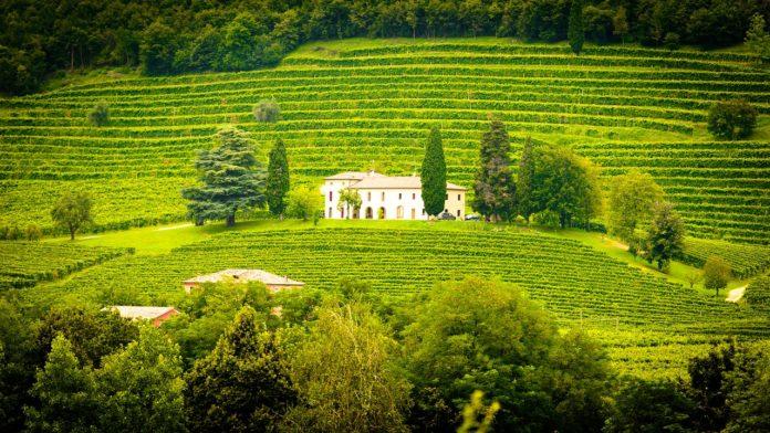 Weingut mit einer Villa