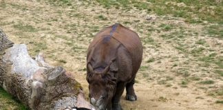 Tierparks sind in Deutschland sehr beliebt