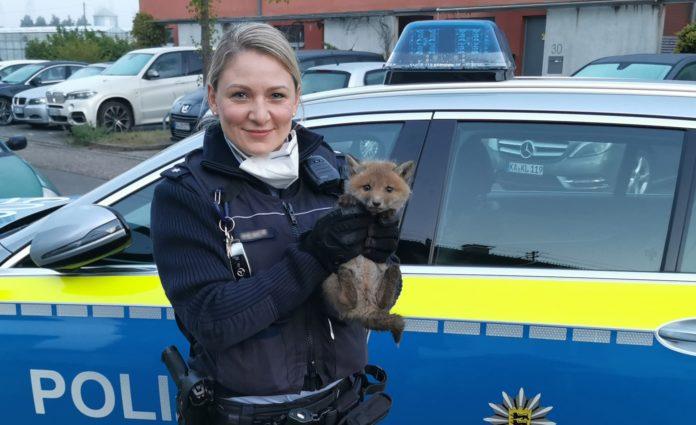 Polizistin befreit kleinen süßen Fuchs