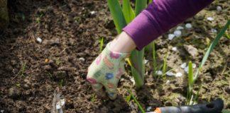 Arbeiten im Garten und Unkraut jähten