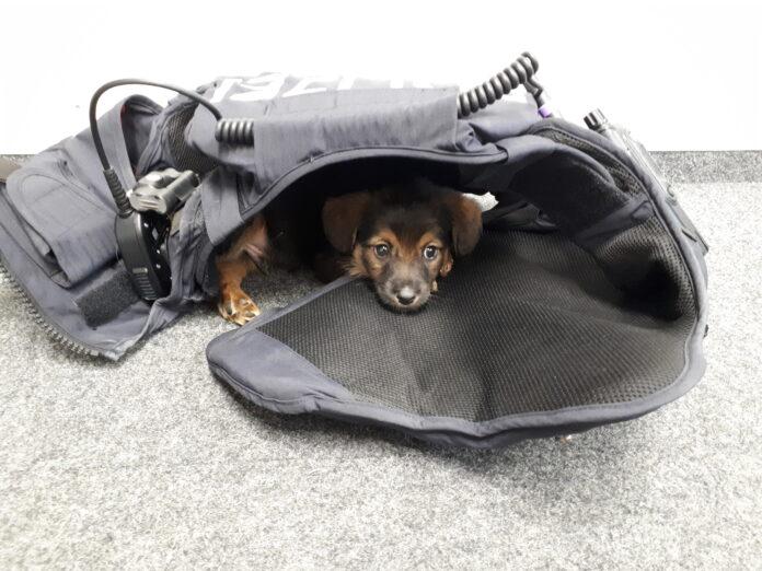 Hund ausgesetzt