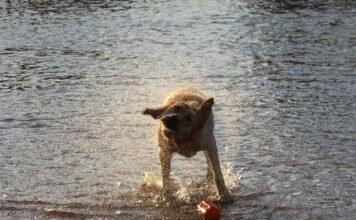 Hund am Fluss
