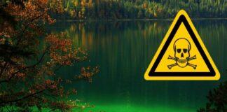 See Grün verseucht