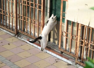 Katze an Eingangstüre