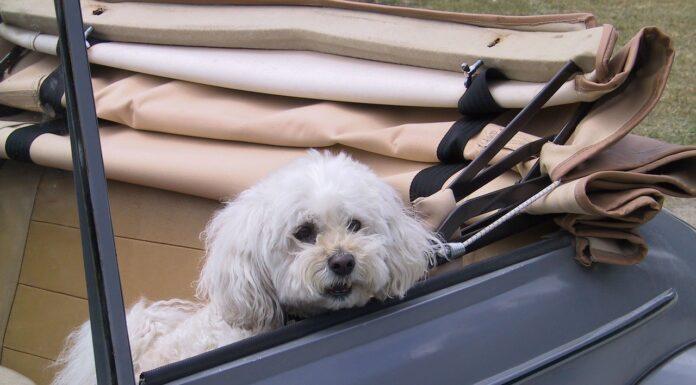 Tiertaxi mit Hund